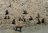 экскурсии в паттайе, остров обезьян