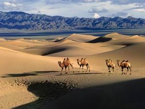 Туры в Монголию из Иркутска   Экзотик Азия Тур