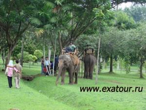 Туры в Индонезию ЭкзотикАзияТур