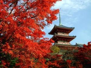 Туры в Японию ЭкзотикАзияТур