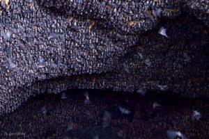 Monfort Bat Cave