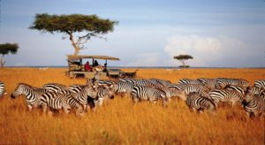 Туры в Танзанию из Иркутска Экзотик Азия Тур