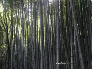 Туры в Японию из Иркутска Экзотик азия тур